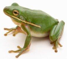 개구리 아이콘